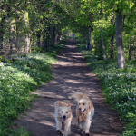 Jane_Redfern_BigWood_dogs_summer