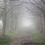 Jane_Redfern_BigWood_Mist