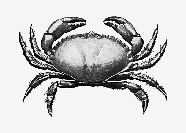 Vintage-crab-illustration